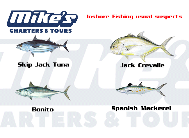 Species you most commonly find in a shared fishing trip.