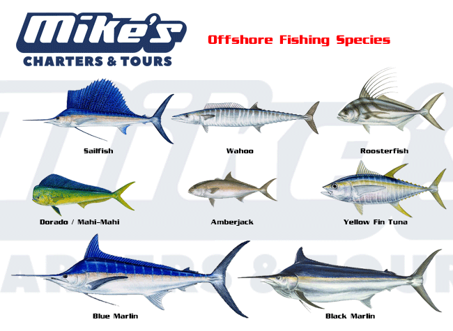 Species you most commonly find in an offshore fishing trip.