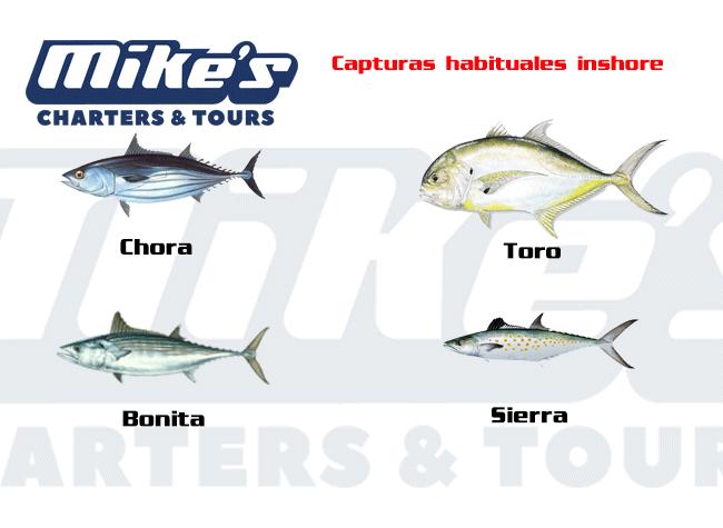 Especies que encontrarás comunmente en un viaje de pesca costera.