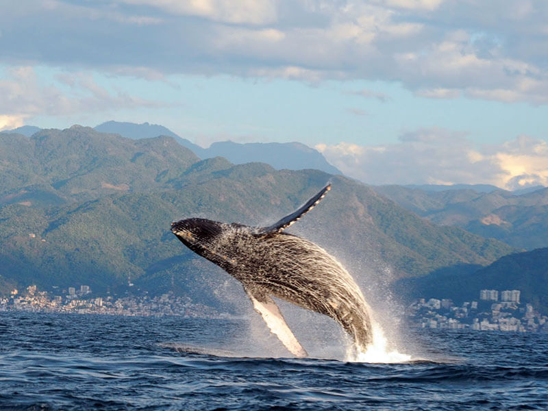 Whale Watching Tour in Puerto Vallarta